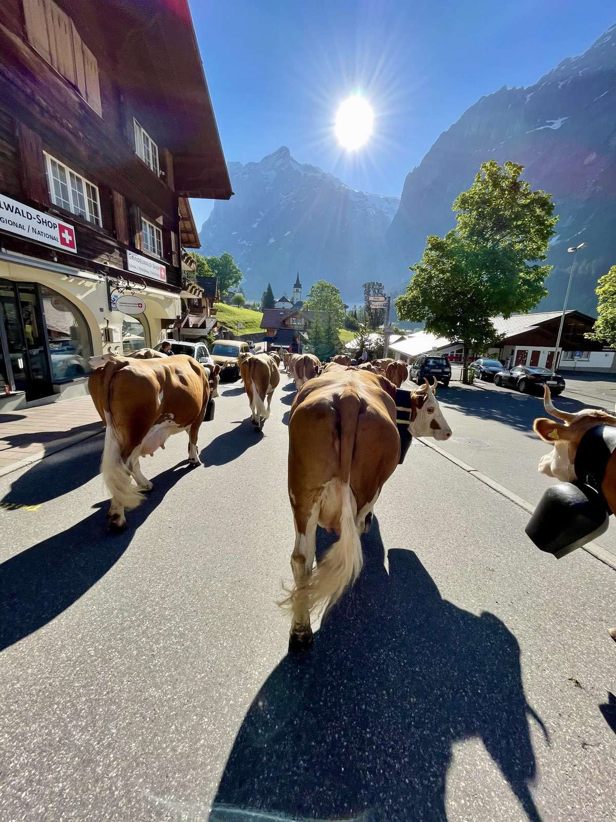 Alpaufzug Grindelwald